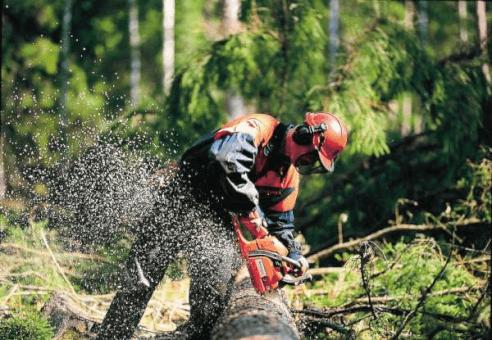 Permis Tronçonneuse PRP Safety Formation